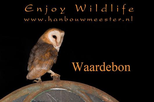 HBN-Waardebon